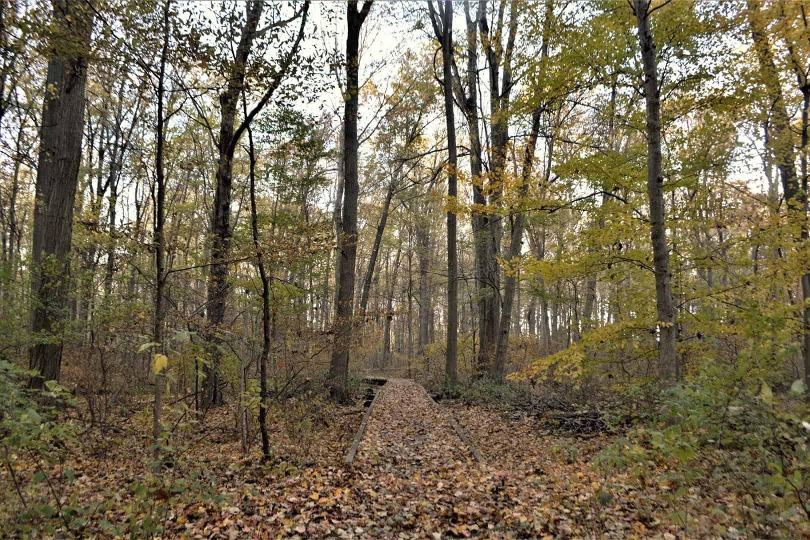 Trees and fallen leaves in Kopegaron Woods
