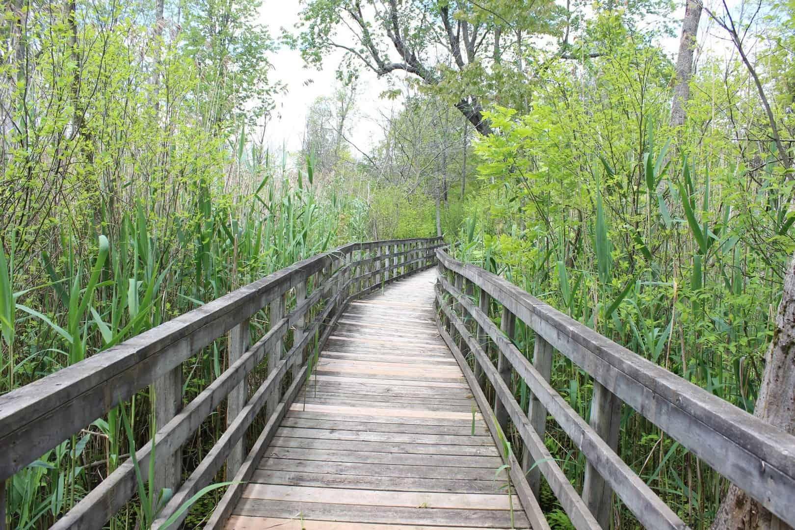 Wooden Bridge through the bushes in Rondeau Provincial Park