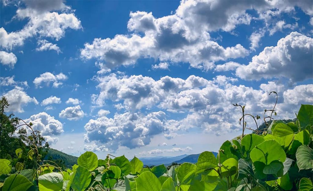 Sky and Kudzu vines view