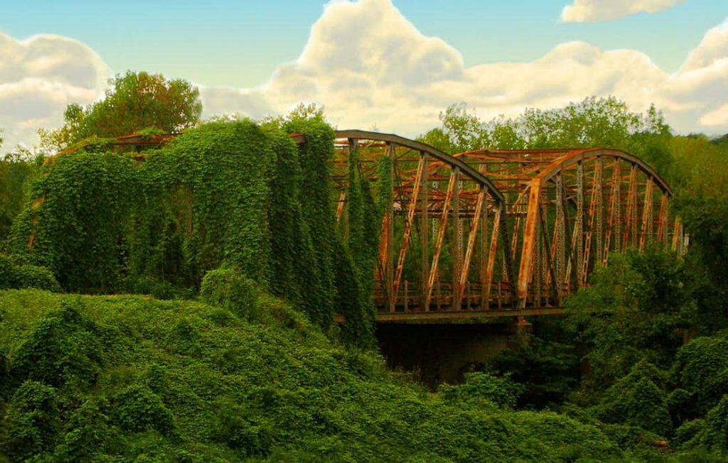 Bridge wrapped with the Kudzu plant
